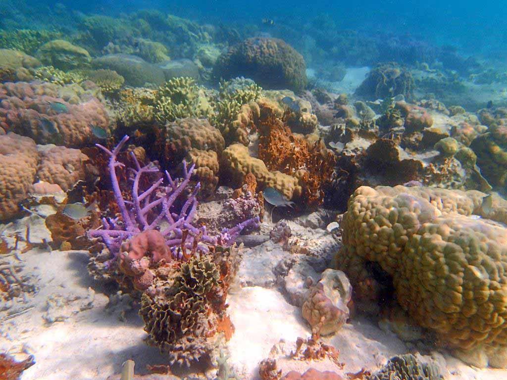 珊瑚花園 Coral Garden