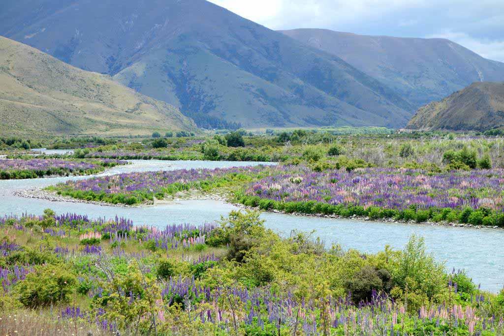 紐西蘭旅遊季節