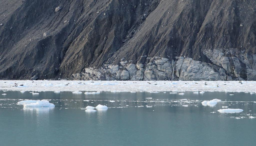 seal in Prince William Sound Glacier