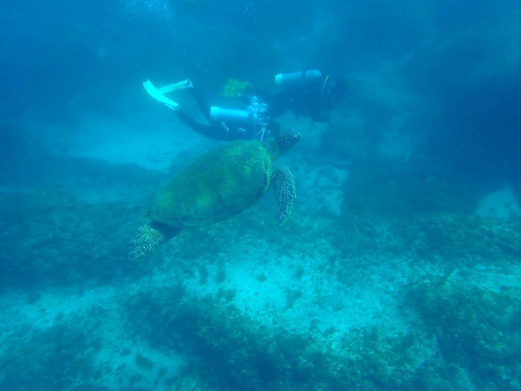 小琉球-深潛