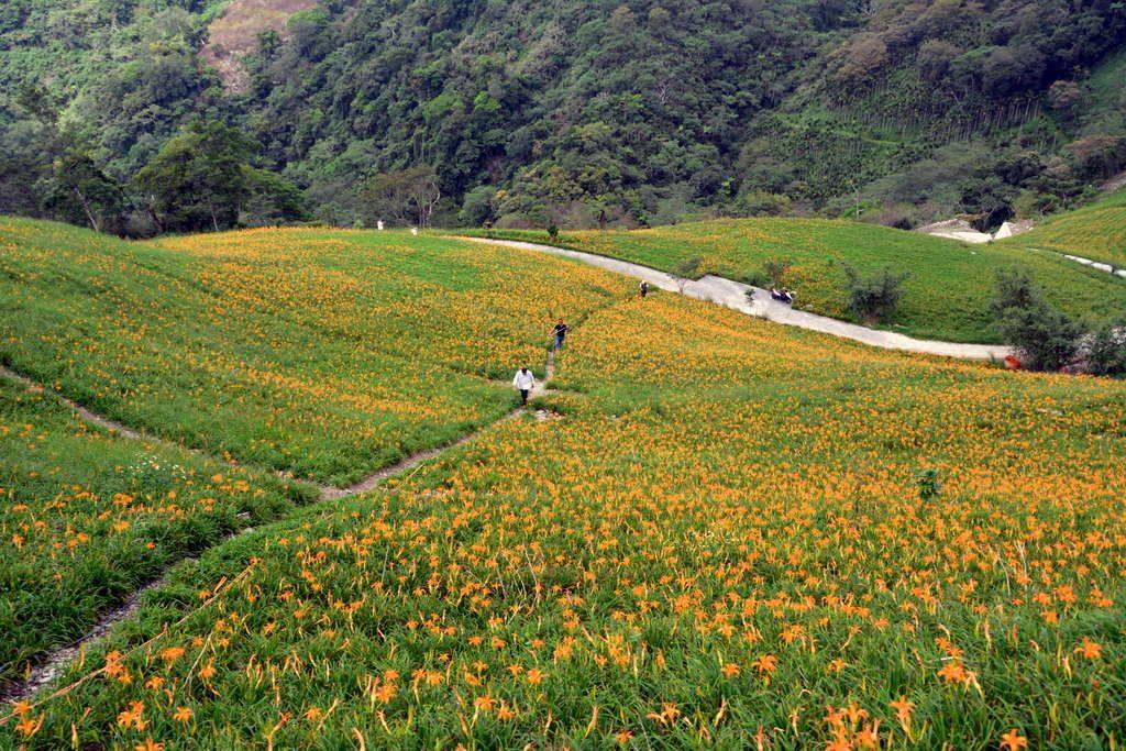 金針山休閒農業區