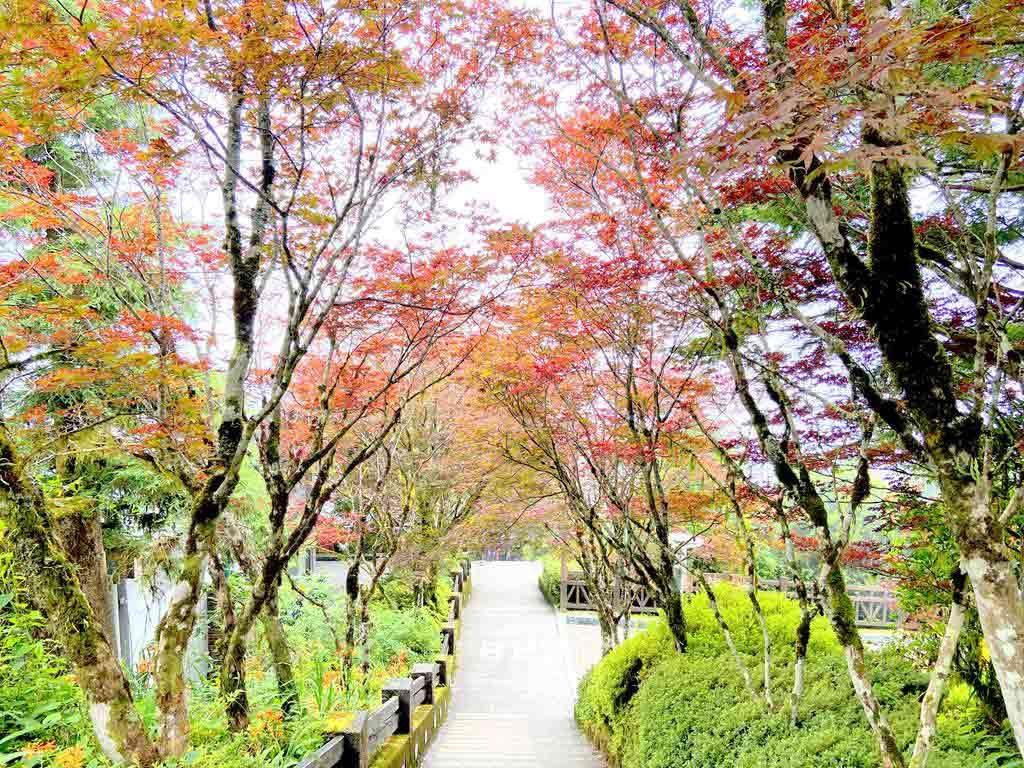 宜蘭太平山國家森林遊樂區