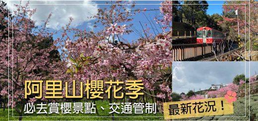 阿里山-櫻花