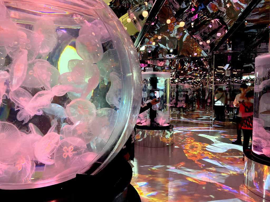 xpark-癒見水母