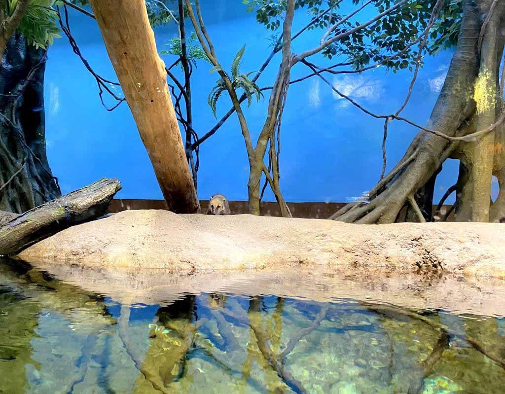 xpark-雨林探險