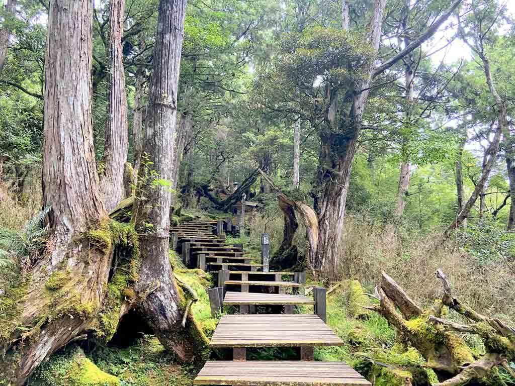 檜木原始林步道