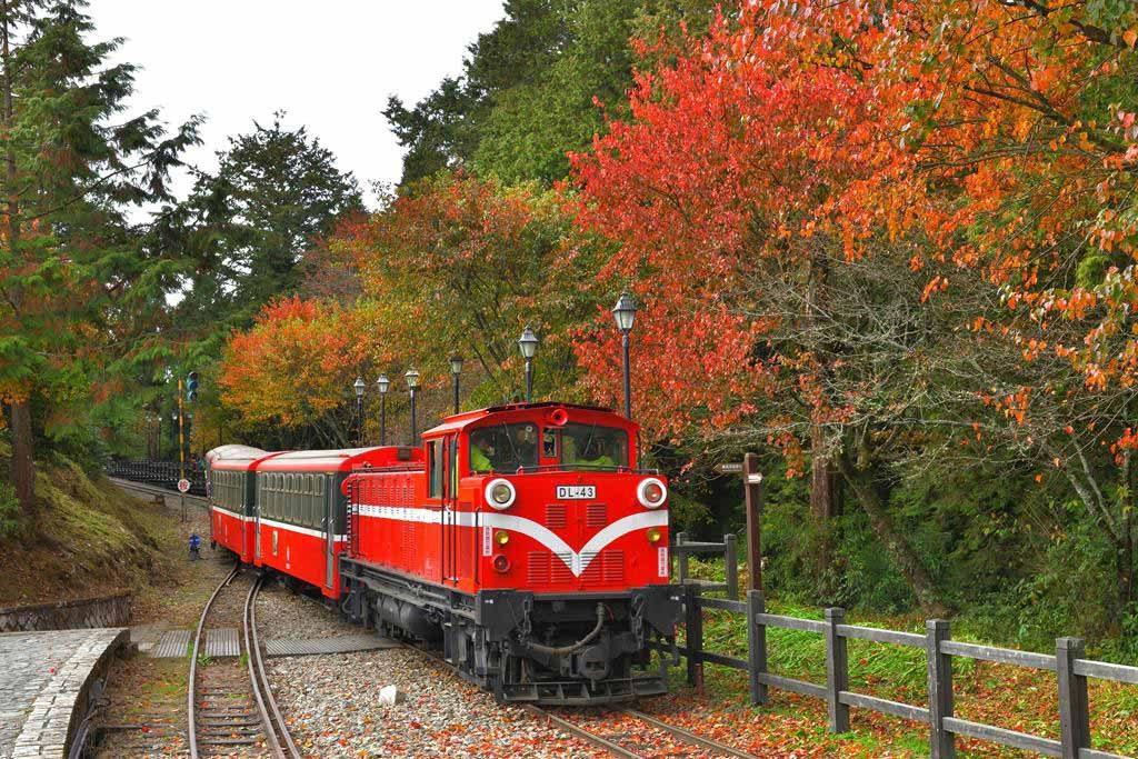阿里山鐵道楓紅-黃源明提供