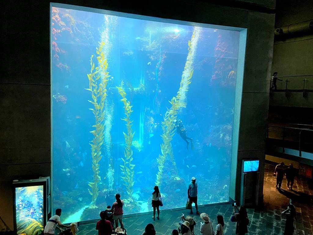 海生館 世界水域館