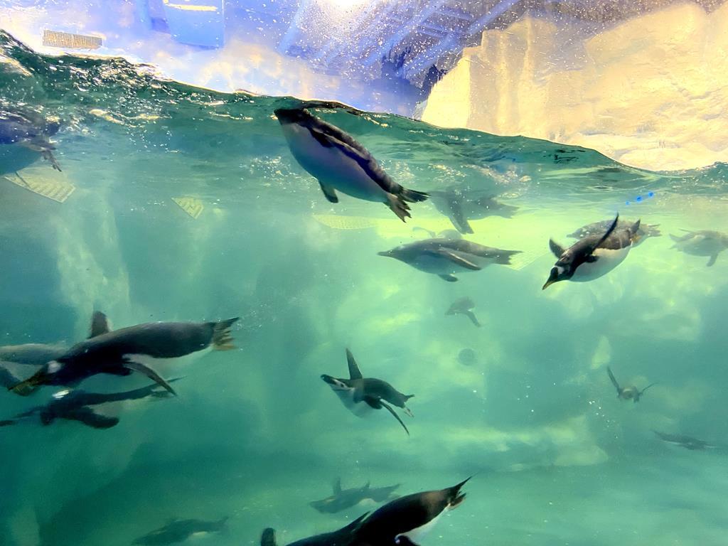 海生館 企鵝