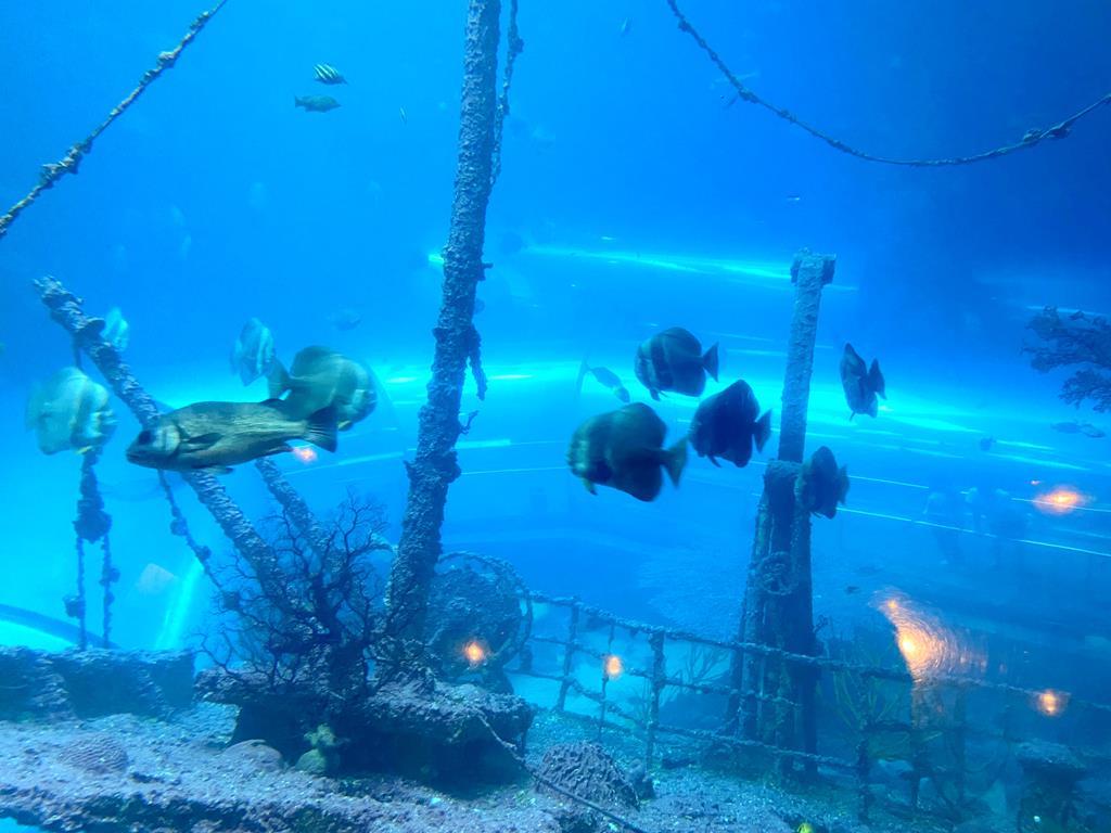 海生館 珊瑚王國館
