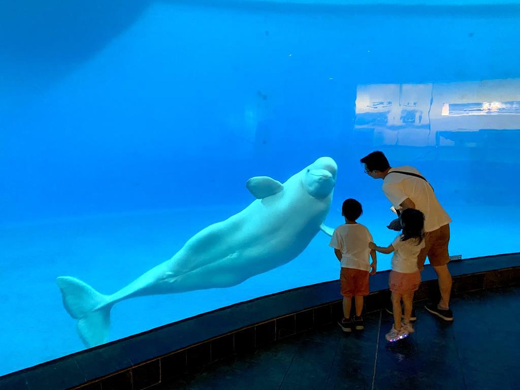 海生館 小白鯨